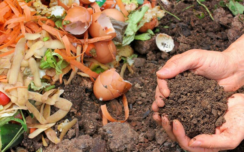 Header Gemüsegarten düngen