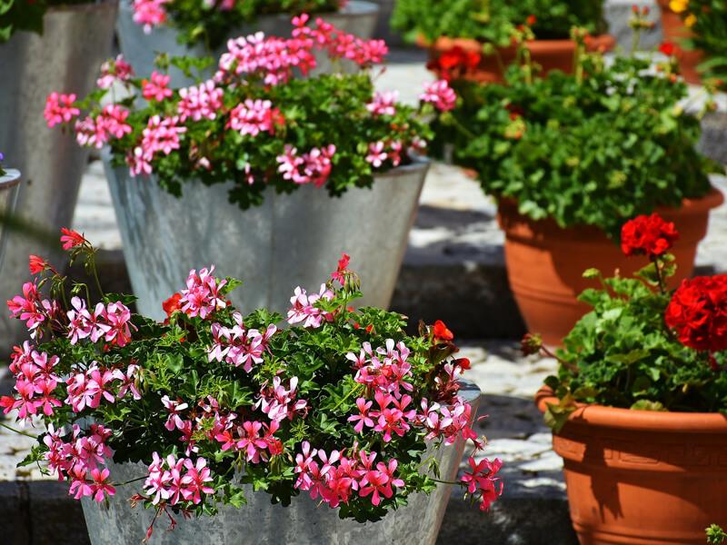Kübel bepflanzen mit unseren Tipps