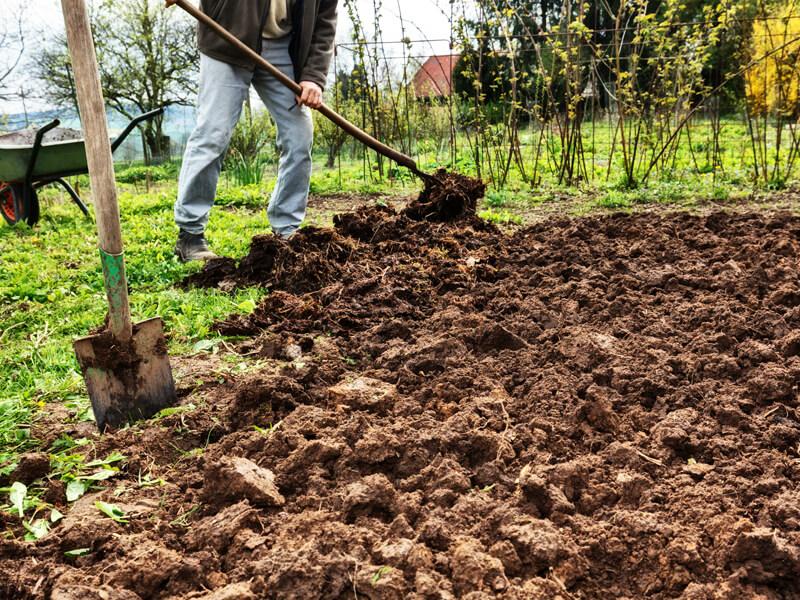 Bodentyp bestimmen - Boden verbessern