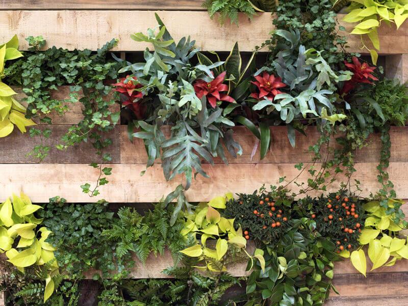 Vertikalbeet auf dem Balkon anlegen / Grüne Wand für den Balkon