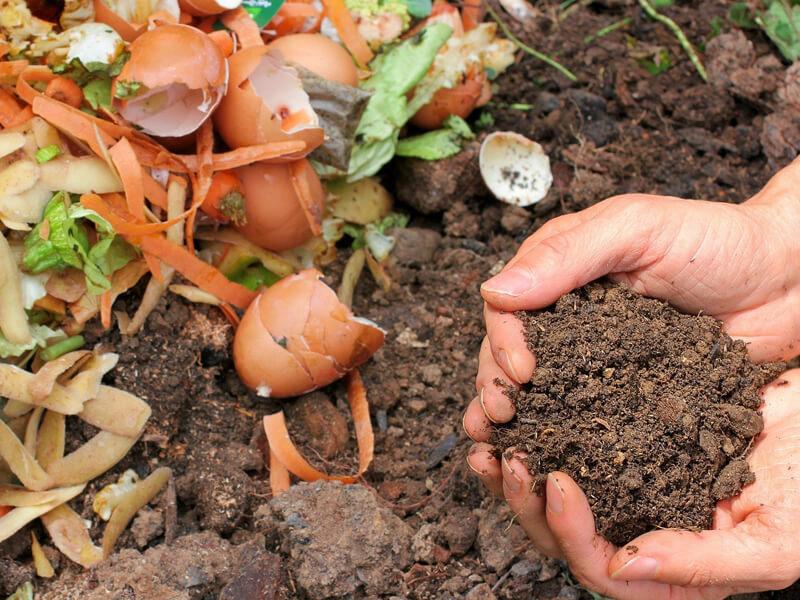 Welche Erde ist für ein Gemüsebeet geeignet?