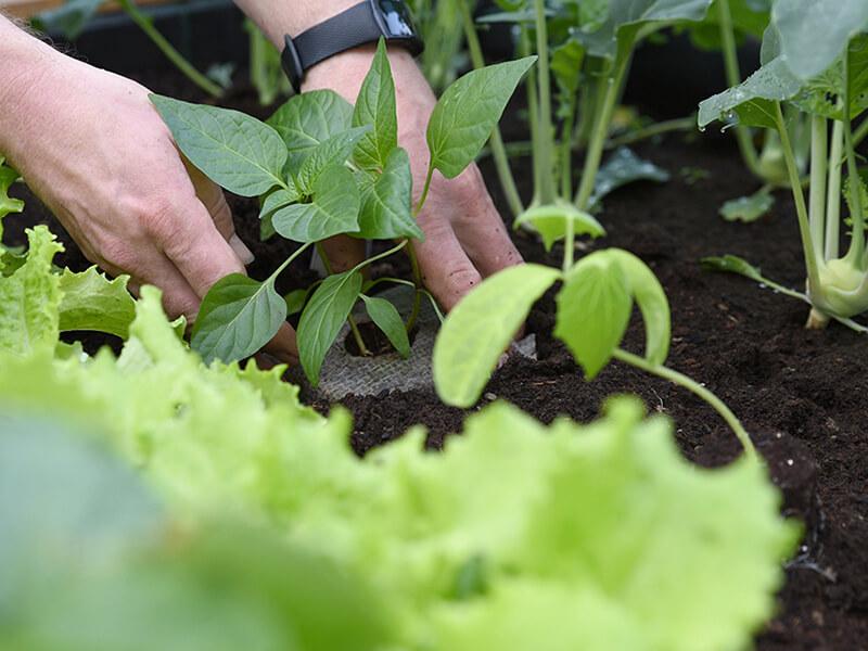 Grundregeln für deinen Gemüsebeet-Plan