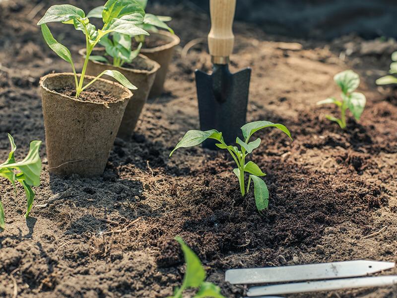 Beispiel für einen Gemüse-Anbauplan