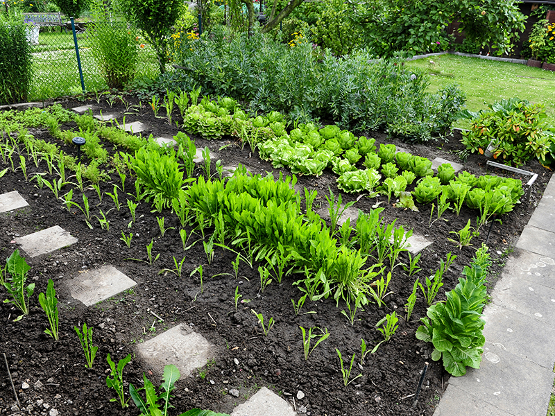 Anleitung: Gemüsebeet-Pflanzplan erstellen
