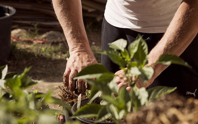 Header Gemüsegarten-Anbauplan