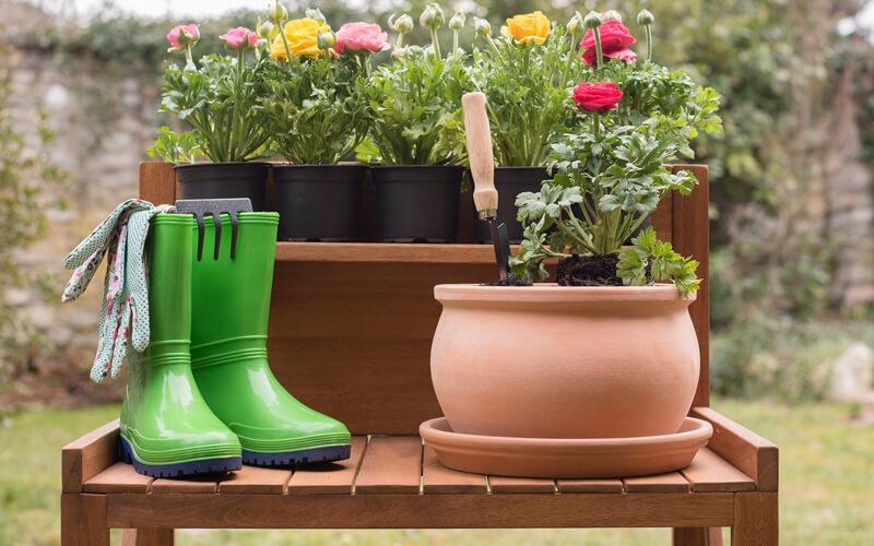Header Gartenkalender Juni