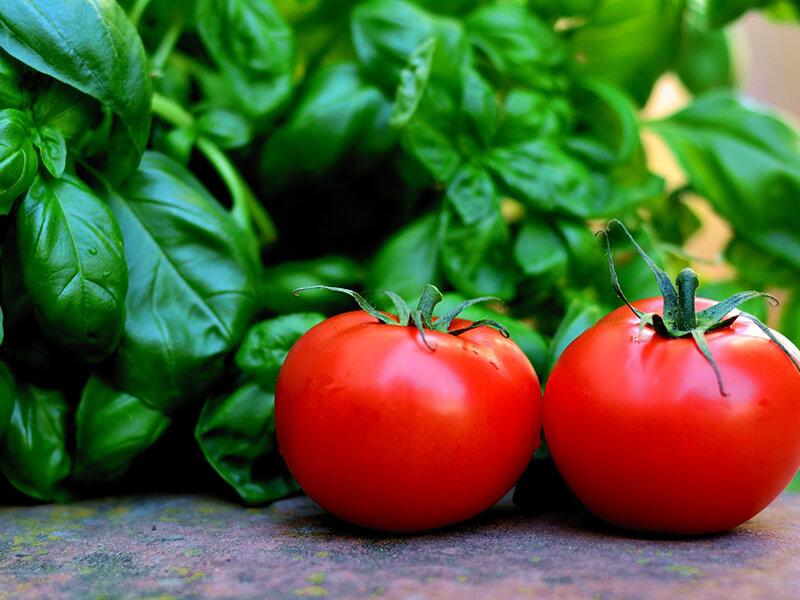 Mischkultur bei Tomaten