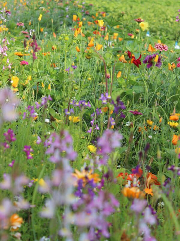 Pflegeleichter Naturgarten mit einer Wildblumenwiese